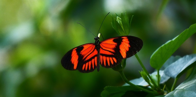 eat healthy and feel light as a butterfly_